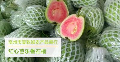 广东省茂名市高州市红心芭乐 200-250克