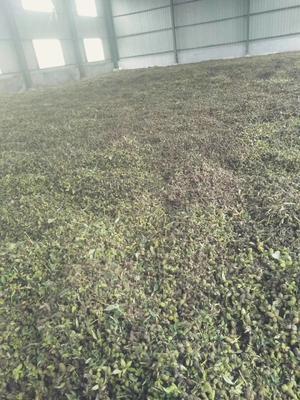 山东省菏泽市牡丹区草芍药 2cm以下 0.5米以下