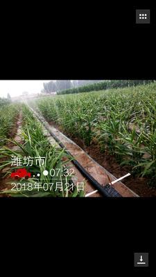 山东省莱芜市莱城区滴灌喷灌