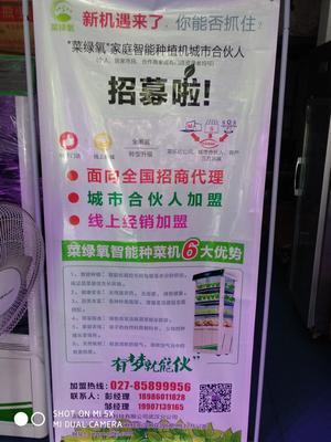 湖北省武汉市江岸区智能家庭蔬菜种植机