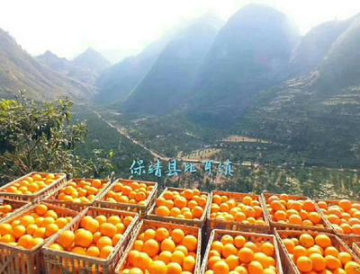 广东省深圳市南山区纽荷尔脐橙 60 - 65mm 4-8两
