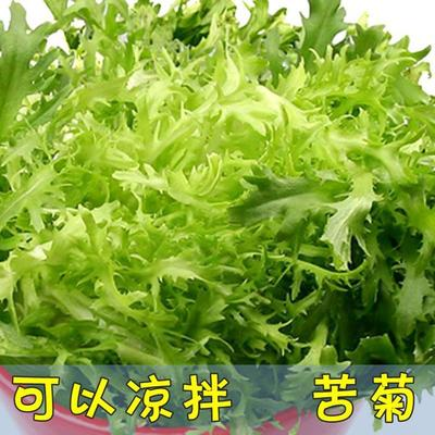 江苏省宿迁市沭阳县苦苣种子
