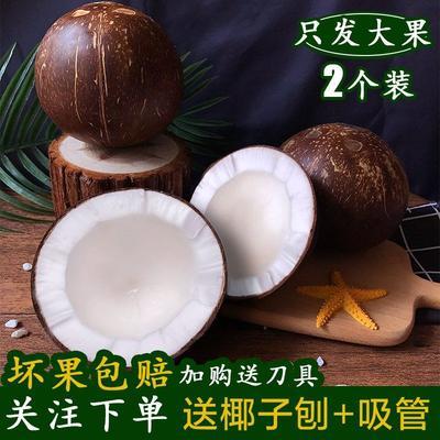 海南省文昌市文昌市椰皇 1.5 - 2斤
