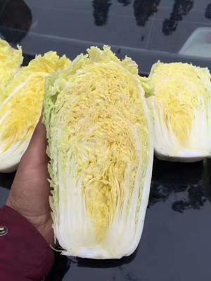 河南省郑州市金水区娃娃菜种子