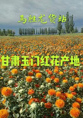 甘肃省酒泉市玉门市红花