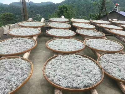 湖南省张家界市永定区新工艺白茶 袋装 特级
