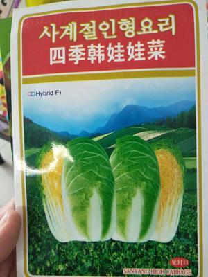 河南省南阳市社旗县娃娃菜种子