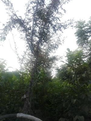 陕西省宝鸡市扶风县皂角树