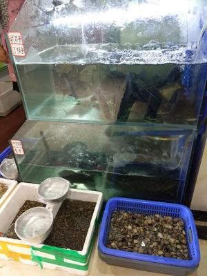云南省昆明市五华区池塘草鱼 人工养殖 0.25-1龙8国际官网官方网站