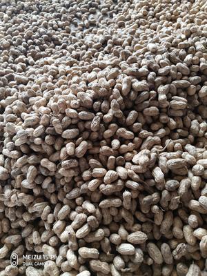 湖北省襄阳市宜城市白沙系列花生 鲜货 带壳花生