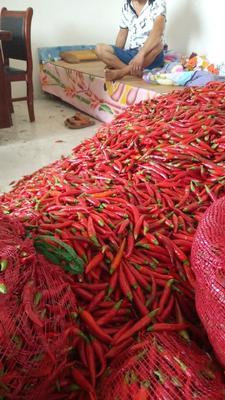 这是一张关于天宇辣椒 5~10cm 红色 中辣的产品图片