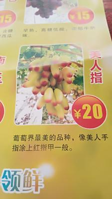 贵州省黔东南苗族侗族自治州黄平县阳光玫瑰 5%以下 1次果 2斤以上