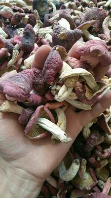 陕西省安康市汉滨区红菇干 散装 半年