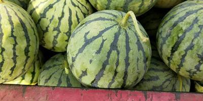 天津滨海新区京欣西瓜 有籽 1茬 8成熟 3斤打底