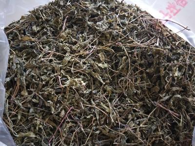 云南省文山壮族苗族自治州广南县版纳古树茶 散装 一级