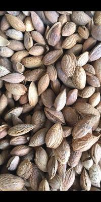 新疆维吾尔自治区喀什地区莎车县巴旦木 半年 带壳