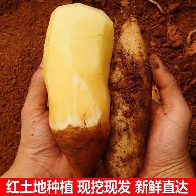 广东省河源市连平县云南高原雪莲果 3两以上