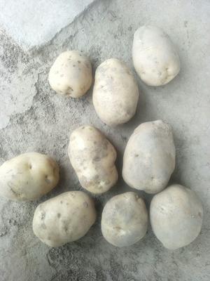 这是一张关于克新一号土豆 3两以上的产品图片