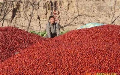 广西壮族自治区玉林市玉州区新疆大枣 一级