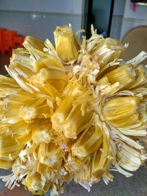广东省茂名市电白区海南菠萝蜜 15斤以上