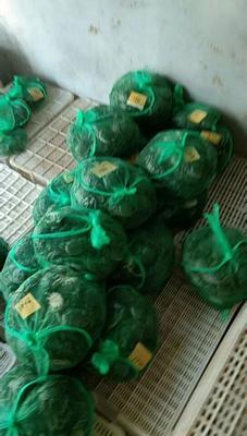 这是一张关于汈叉湖大闸蟹 2.0两以下 公蟹的产品图片