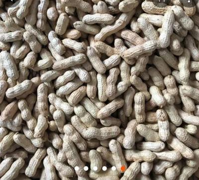 山西省忻州市原平市带壳花生 干货 带壳花生
