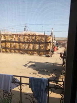 吉林省松原市扶余市玉米干粮 霉变≤2% 净货