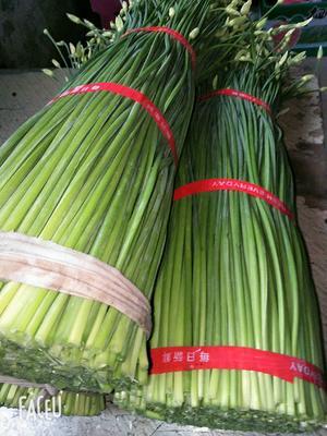 江苏省徐州市贾汪区韭菜苔 35~40cm