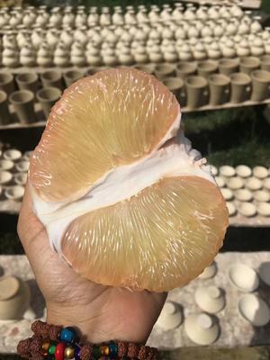 这是一张关于缅甸丑柚 2斤以上的产品图片