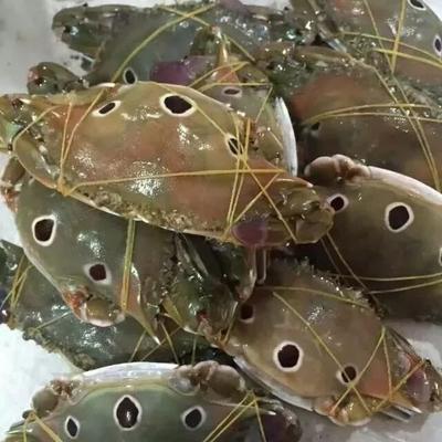 这是一张关于梭子蟹 2.5-3.0两 母蟹的产品图片