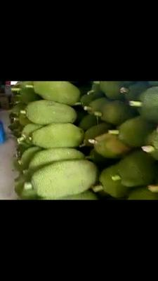 广西壮族自治区南宁市兴宁区海南菠萝蜜 15斤以上