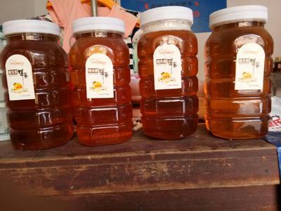 广西壮族自治区梧州市苍梧县土蜂蜜 塑料瓶装 95%以上 2年以上