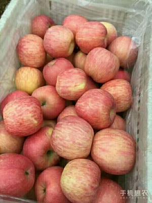 这是一张关于美八苹果 纸袋 条红 80mm以上的产品图片
