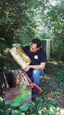 湖南省娄底市新化县土蜂蜜 塑料瓶装 100% 2年以上