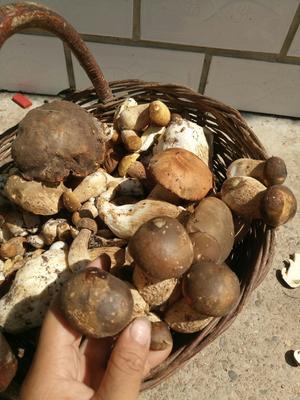 黑龙江省齐齐哈尔市龙江县干磨菇 袋装 1年以上