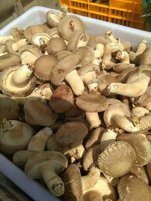 这是一张关于鲜草菇的产品图片