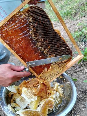 海南省三亚市天涯区土蜂蜜 玻璃瓶装 100% 2年以上