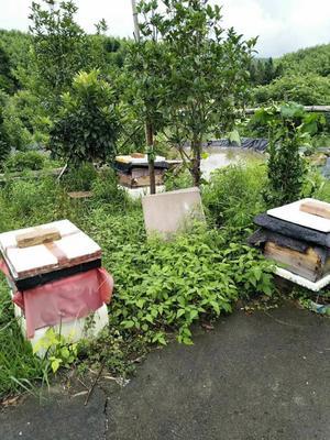 江西省抚州市资溪县土蜂蜜 塑料瓶装 100% 2年以上