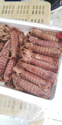 这是一张关于海米 的产品图片