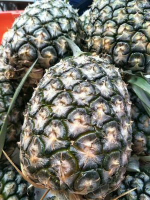 福建省漳州市龙文区野菠萝 2 - 2.5斤