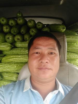 广西壮族自治区柳州市柳城县新农村苦瓜 25cm以上 8两以上