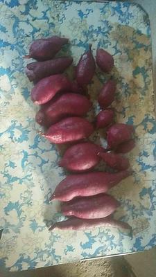 这是一张关于紫云红心红薯 紫皮 3两以上的产品图片