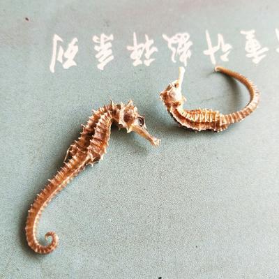 青海省西宁市城东区海马