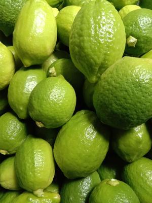 广西壮族自治区梧州市藤县台湾香水柠檬 3.3 - 4.5两