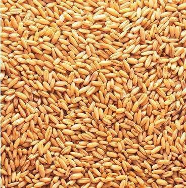安徽省亳州市蒙城县混合小麦
