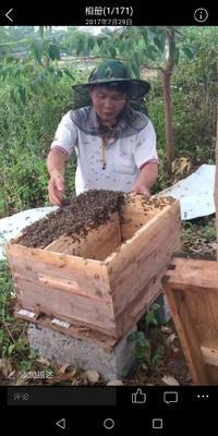 广西壮族自治区贵港市港南区土蜂蜜 塑料瓶装 100% 2年以上