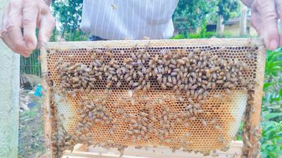 广西壮族自治区玉林市博白县荔枝蜜 塑料瓶装 100% 2年以上