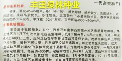 福建省漳州市南靖县胡萝卜种子 良种