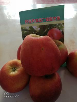 这是一张关于鲁丽苹果苗 1~1.5米的产品图片