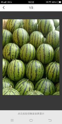 这是一张关于地雷瓜 有籽 1茬 9成熟 10斤打底的产品图片